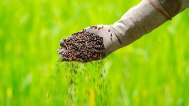balance-gei-fertilizantes