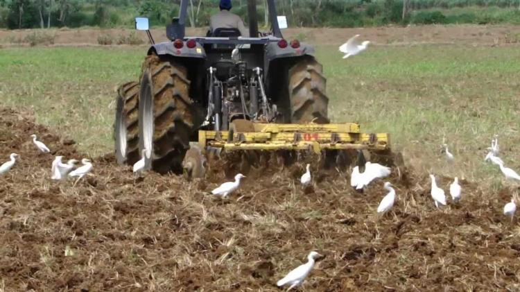 compactacion-arado-potreros-cortesia-gs-palmera