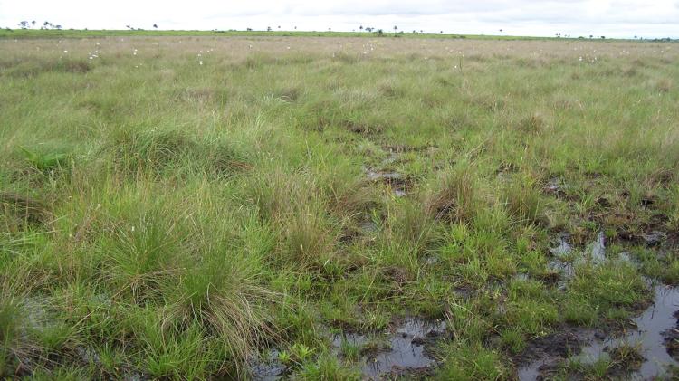 compactacion-deforestacion-cortesia-pybio