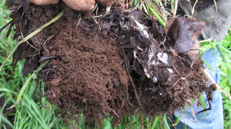 compactacion-suelo-vivo-cortesia-agricultura-regenerativa-iberica