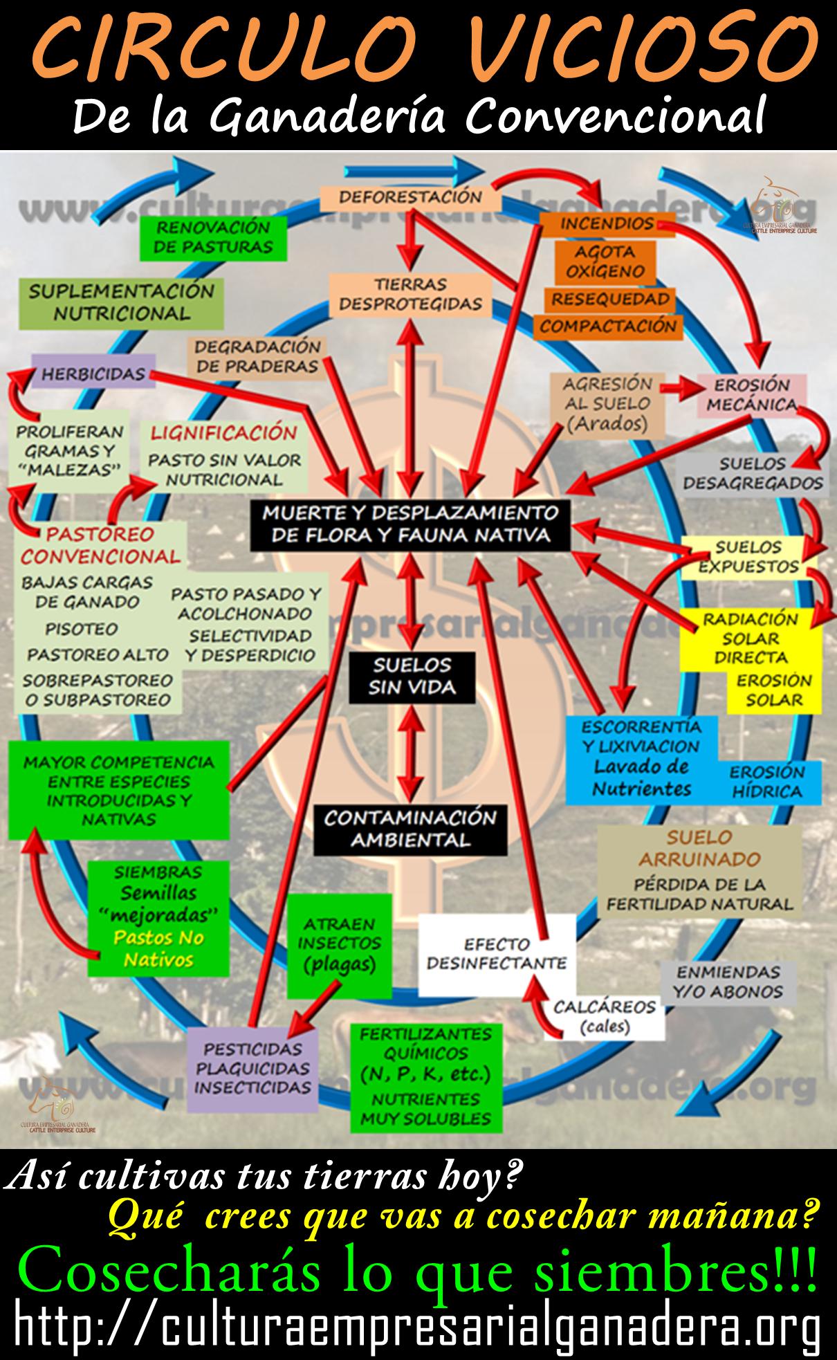 circulo-virtuoso-infografia-c-vicioso