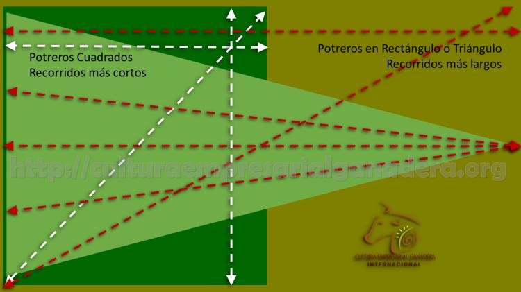 potreros-cuadrados-grafica-potreros-alargados