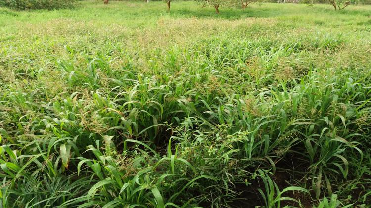 regenerar-pastizal-biodiversidad-botanica-2