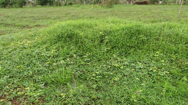 regenerar-pastizal-biodiversidad-botanica