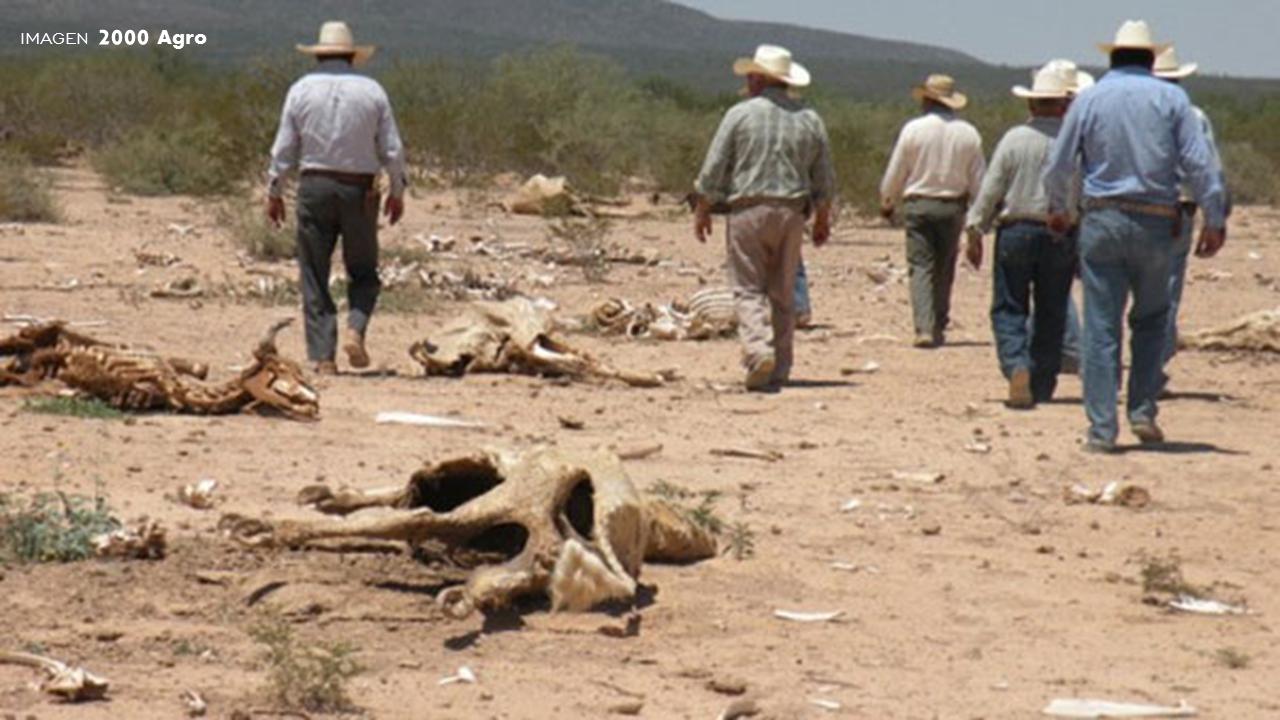 sostenible-o-sustentable-ganado-muerte-sed-mexico