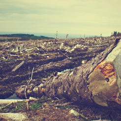 urge-cambio-tala-bosque