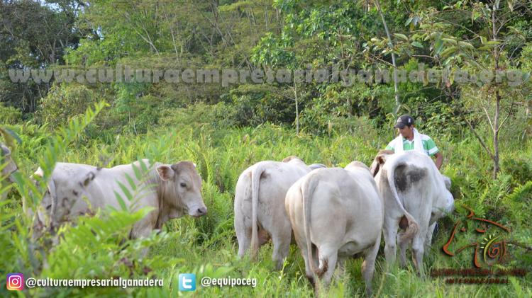 Alimentación vs Rentabilidad (SPRV Charolais-Cebu)