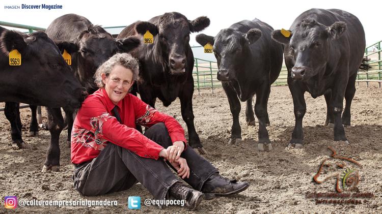 Temple Grandin (con ganado en corral)