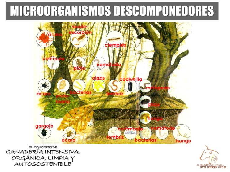 Microorganismos II - Descomponedores