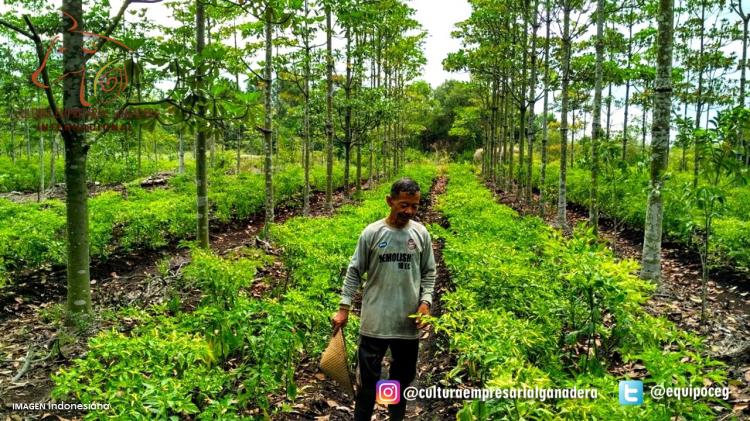 Origen SPRV (Agroforestería agricultura)
