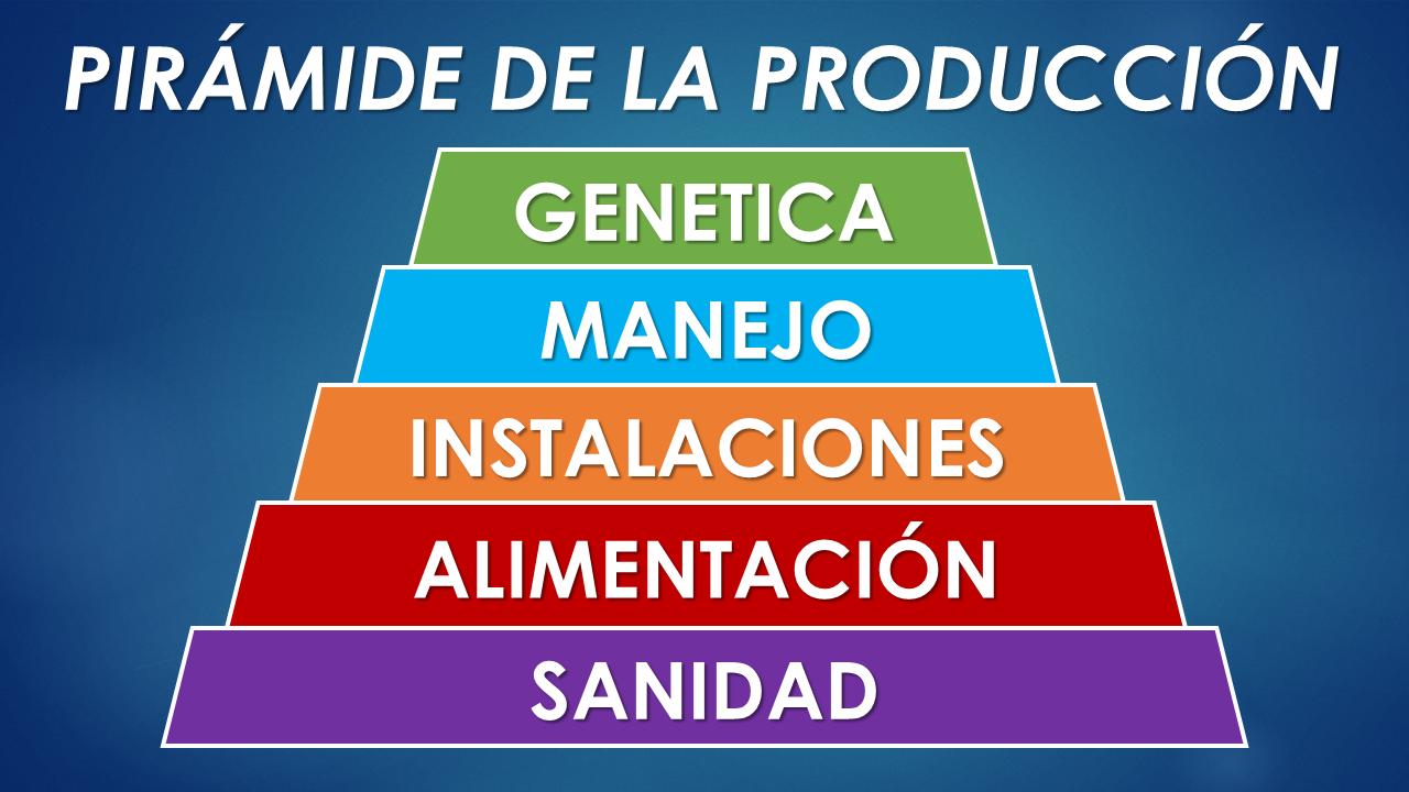 PRV Pinheiro 2009 - Pirámide completa